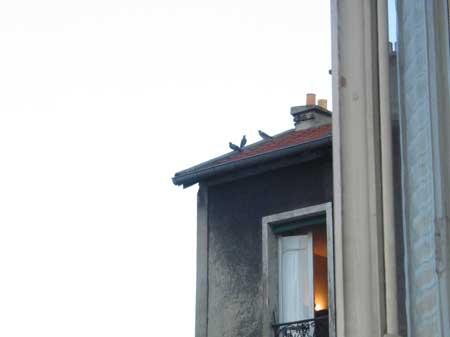 trois pigeons s'aimaient d'amour tendre